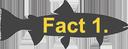 fact1e