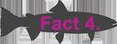 Fact4