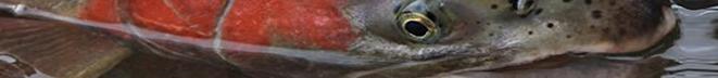 hatchery banner